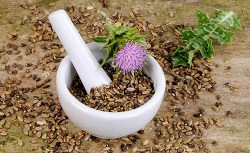 milk thistle benefits and side effects