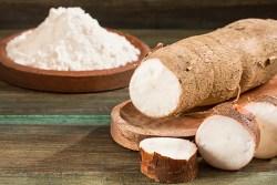 cassava poisoning symptoms