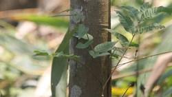 cinnamon tree health benefits