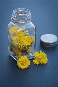 coltsfoot plant benefits