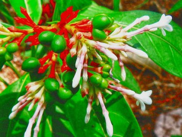 rauwolfia serpentina homeopathy