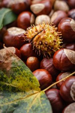 are chestnuts good for diabetics