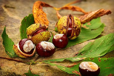 chestnuts benefits and side effects