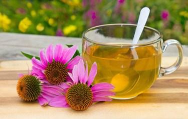 Echinacea Root Health Benefits 1