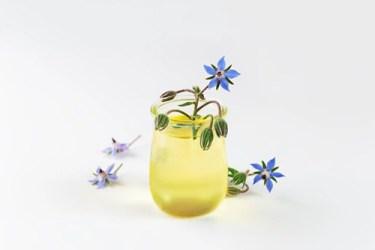 Borage Plant Health Benefits 1