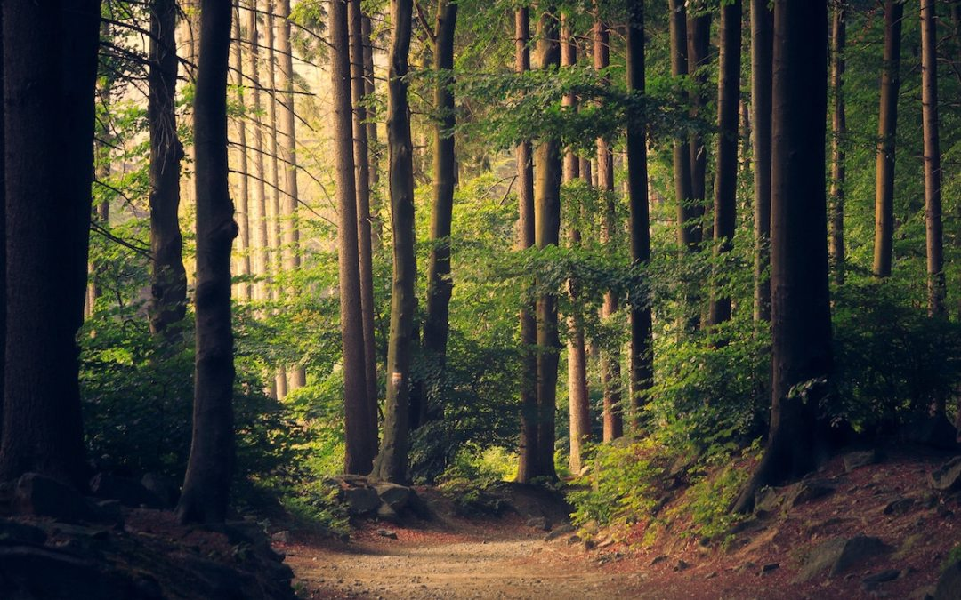 How trees can help reduce stress