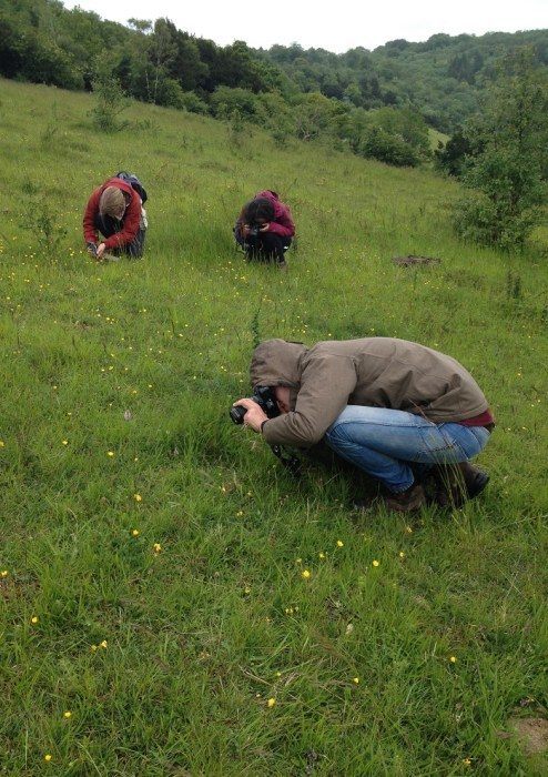 Lucy, Jade and Mike collecting photographic records for common spotted-orchid (Dactylorhiza fuchsii)