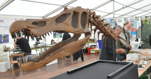 A replica Baryonyx skull which is used as a way to talk about dinosaur specimens in the Museum