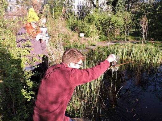 Collecting our newt bottle traps in the Wildlife Garden