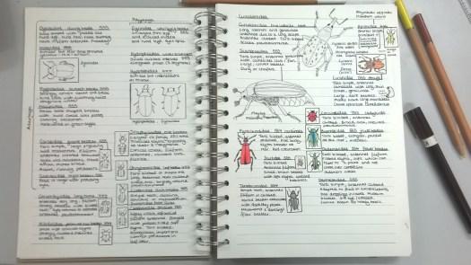 Sally's notebook