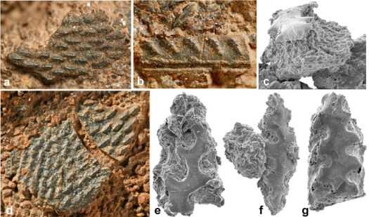 Montage of photos showing close ups of fossil plates and scales