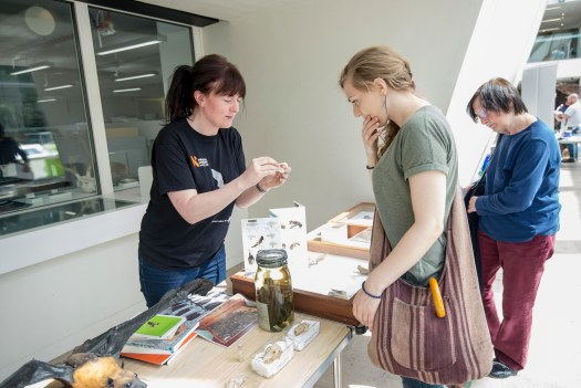 Photo of Louise showing specimens to and speaking with two visitors