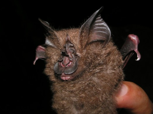 Photo of a bat being held in the hand