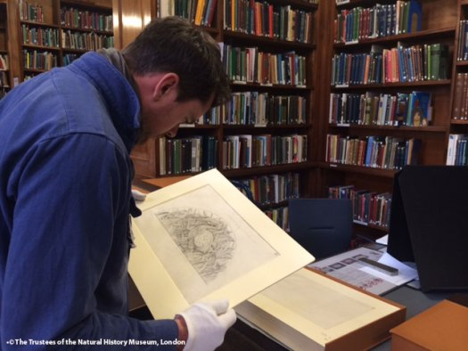 Photo showing Rory holding a drawing within the Library