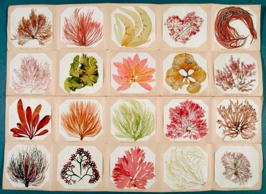 A display of 20 different species of seaweed, presented in a grid of equal sized squares. Seaweeds range in colour from green, yellow, orange and red, to brown.