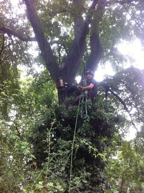 Photo showing Liam half way up a lime tree installing the recorder