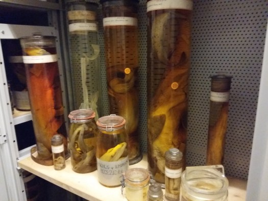 Photos of specimens in spirit jars on a shelf