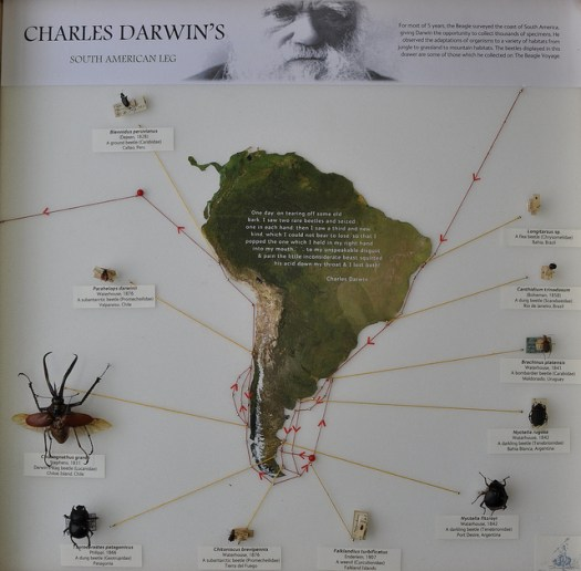 Photo showing a geographical map of South America, with beetle specimens and labels pinpointed to particular locations via strings to areas on the coast of the continent.