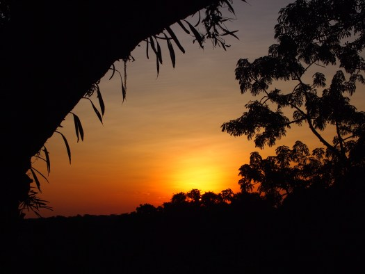 Photo showing a sunset above the trees of the forest