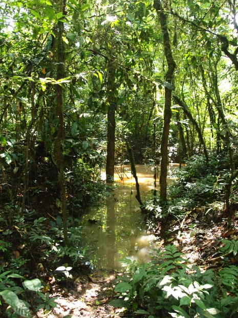 Photo showing the forest floor covered in murky water
