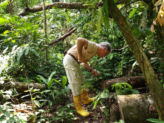 Photo of Terry bending over and pootering (using a device to suck insects into a bottle) over some logs and trees