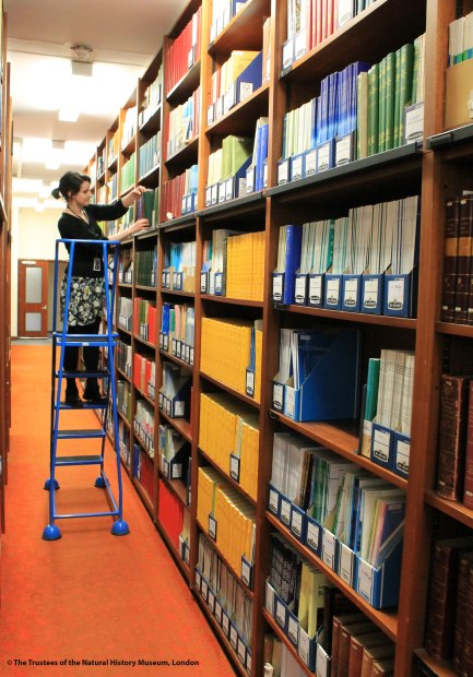 Photo of a member of the Library staff on a movable ladders placing a book into one of the shelving racks in the Library