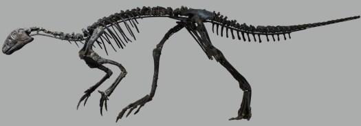 Hypsilophodon foxii,
