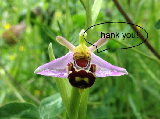 Photo of a bee orchid flower with thank you in a speech bubble coming from a 'mouth'-like shape on the flower.
