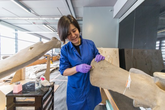 Photo of Cheryl Lynn, a conservator, standing in the centre of the photograph and cleaning the tip of a large bone