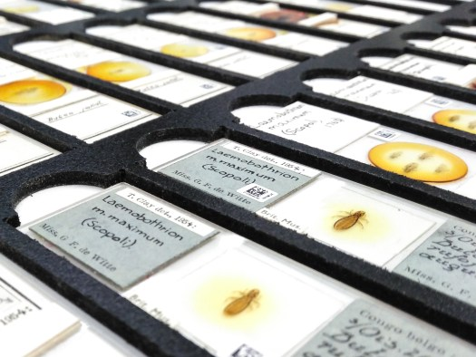 A photograph of a tray of microscope slides.