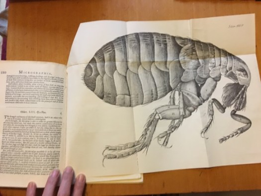 Photo showing an unfolded page insert with an illustration of a flea, in an edition of Micrographia