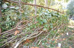 Photo showing the newly laid hedge stretching from left to right across the image, with leafy wooden sticks interwoven in a lattice around wooden posts to form the structure