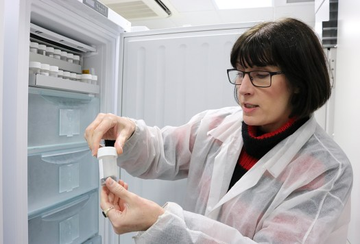A photograph of the Molecular and Frozen Collections Manager with some of the frozen IPI specimens.