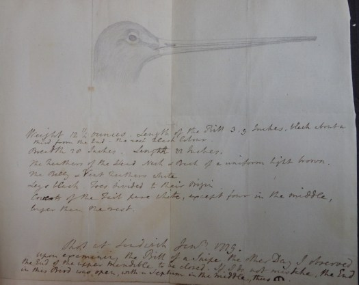 Unfolded sheet which had been added to the annotated 1768 edition of Pennant's British Zoology. At the top of the page is a pencil drawing of the head and bill of a Snipe, side view. Underneath are handwritten notes relating to Thomas Pennant's examination of the snipe.