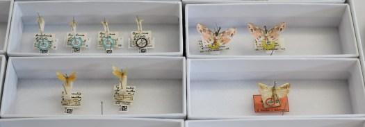 Lepidoptera type specimens