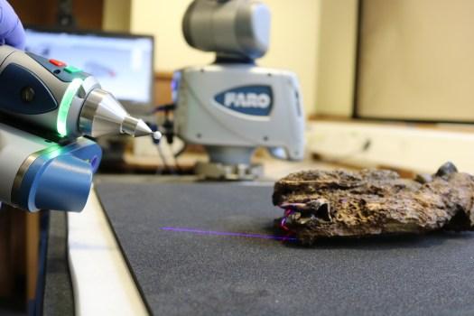 3D Scanning Darwin's Fossil Mammals