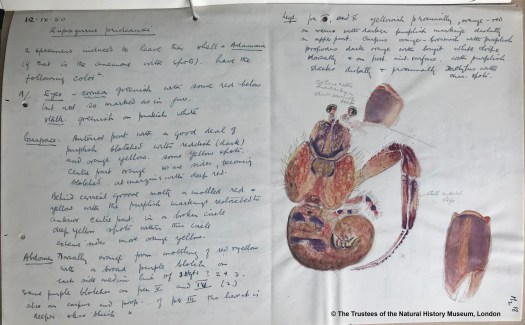 Gordon, Isabella Sketches made at Millport (DF_252_13_3)
