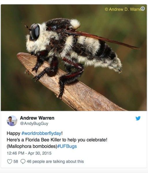 robber-fly-tweet