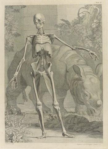 Plate from Tabulae sceleti and musculorum corporis humani.jpeg