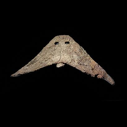 Fossil amphibian skul Earth Gallery Porthole specimen 2019