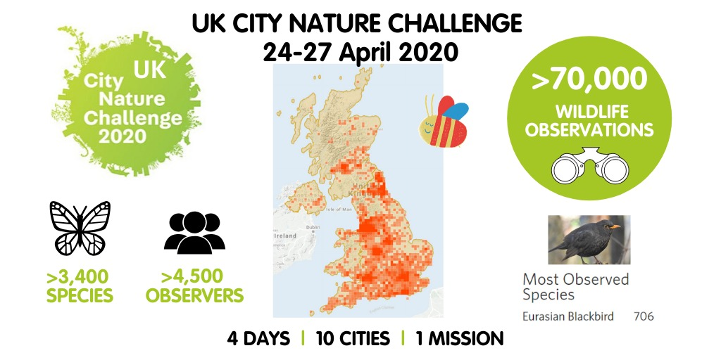 Summary of UK City Nature Challenge 2020
