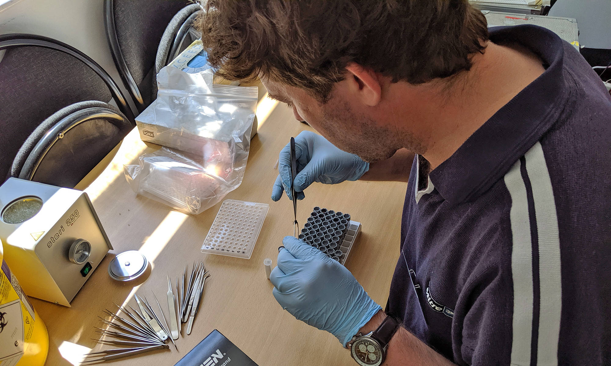 A man wearing blue gloves sits hunched over a tray of tubes as he uses a pair of tweezers to place small pieces of insects into each one