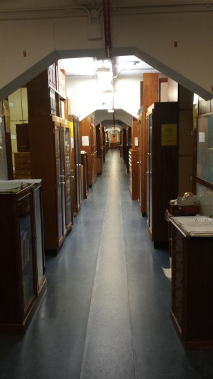 Photo showing a corridor of cabinets in the Museum collections