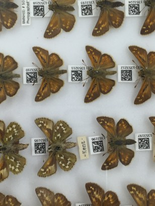 Butterflies with QR codes