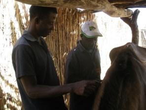 GHDT staff Alpha and Saloum examine a patient. ©Demelza Kingston