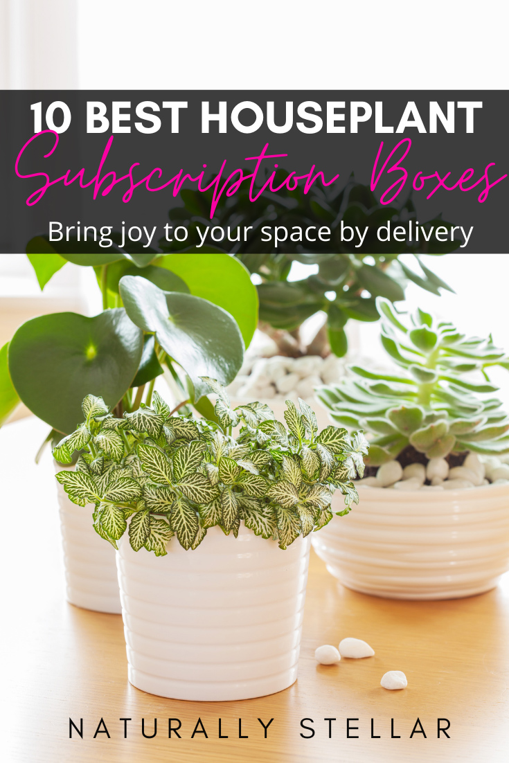 10 Best Succulent and Houseplant Subscription Boxes That Delivery Joy | Naturally Stellar