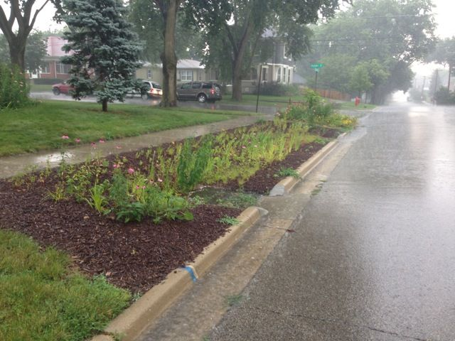 vegetated  swale with rain