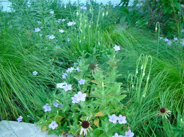 June's entry garden