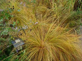 prairie dropseed and lantern