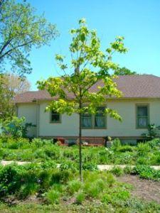 red Oak parkway 5:2010